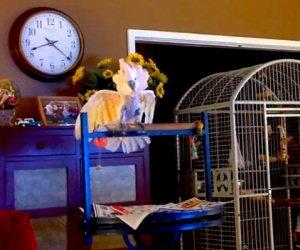 Una coppia litiga spesso, il pappagallo decide di imitarli