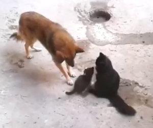 Mamma gatta presenta i suoi gattini ad un vecchio amico