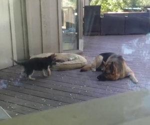 Questo cucciolo non vuole dormire, ecco come reagisce la madre