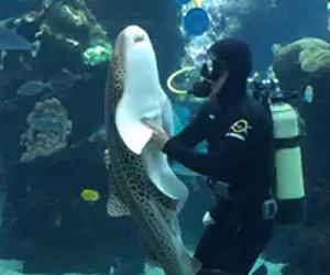 Il sub pulisce la vasca, ad un tratto viene lo squalo e succede questo...