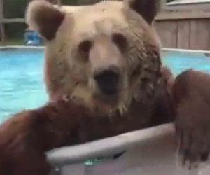 Un orso scopre una piscina e la sua reazione è esilarante