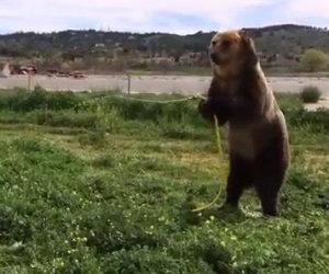 Un orso decide di annaffiare un cane, la sua reazione è buffissima