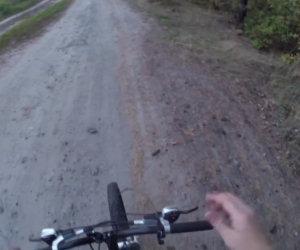 Orso insegue un uomo in bicicletta