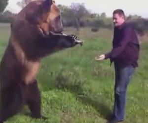 L'orso più affettuoso che ci sia