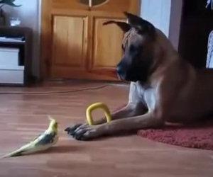 Pappagallo e cane conversano