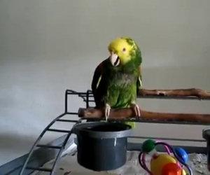 Un neonato arriva in famiglia, ciò che fa il pappagallo è incredibile