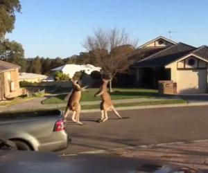 Cosa accade nelle periferie australiane