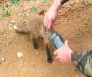 Persone che salvano gli animali