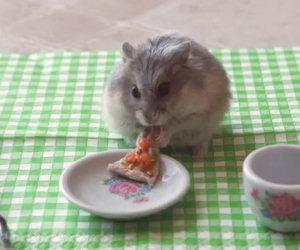 Piccolo criceto mangia una piccola pizza