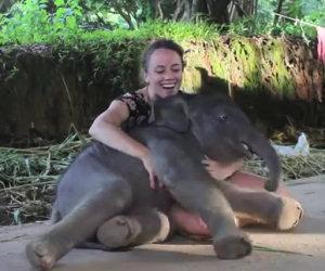 Un elefante di due settimane si siede vicino a lei e inizia a giocare