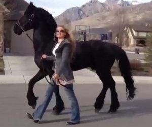 Porta il suo cavallo a fare un giro, tutti restano a bocca aperta