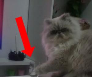 Ecco quello che i nostri amici gatti sanno fare meglio!