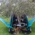 Il modo in cui questo macchinario raccoglie le olive è stupefacente