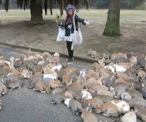 Ragazza contro centinaia di conigli