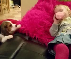 Vuole raggiungere la bimba sul divano, ecco cosa fa quando ci riesce