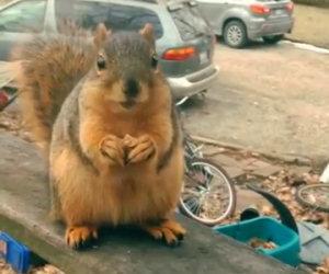 Ramone, lo scoiattolo parlante