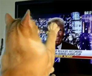 Ecco la reazione del gatto durante un comizio di Donald Trump