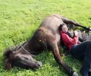 La ragazza si stende tra due cavalli, la loro reazione è dolcissima