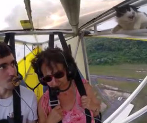 Spiccano il volo ma non si accorgono che il gatto è sull'ala del mezzo