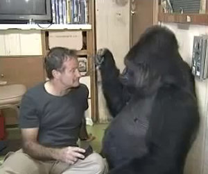 Robin Williams ed il gorilla Koko