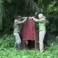 Salvano uno scimpanzè, ecco cosa succede quando lo liberano