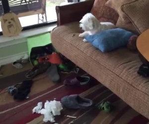 Trova un disastro in casa, ecco come fa a scoprire il colpevole