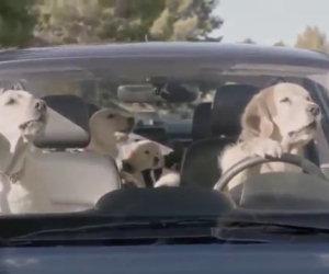 Ecco che cosa accadrebbe se i cani potessero guidare