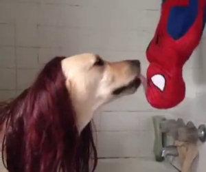 Come sarebbe la scena del bacio di Spiderman vista da un cane?