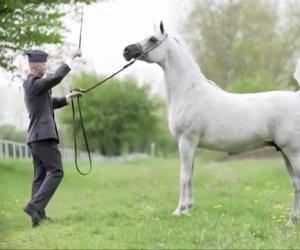 Un uomo e il suo elegante cavallo, un'intesa incredibile