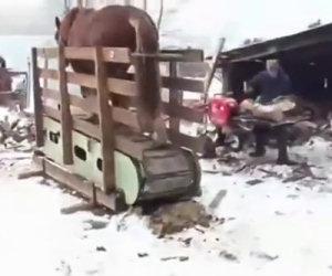 Tagliare la legna usando un cavallo