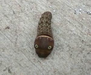Trova uno strano animale nel suo garage, ecco di cosa si tratta