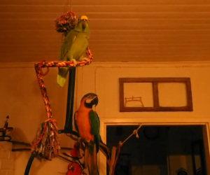 Uccelli pazzi