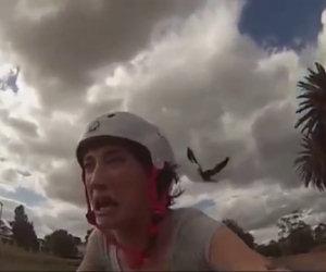 Uccello arrabbiato attacca ciclista