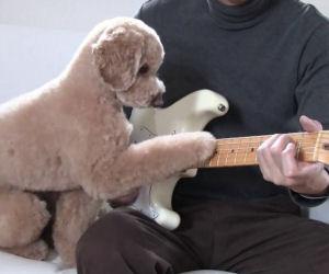 Un cane che suona la chitarra