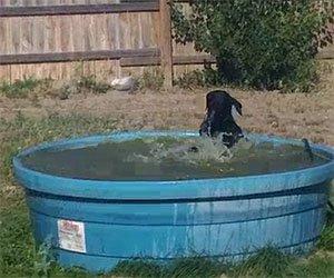 Husky gioca con i suoi cuccioli video incredibili - Come spiare in bagno ...