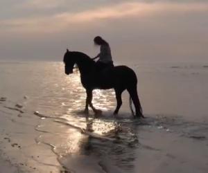 Un cavallo elegantissimo