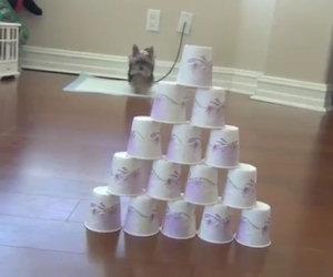 Questo cucciolo ha solamente 7 mesi ma è già un piccolo genio