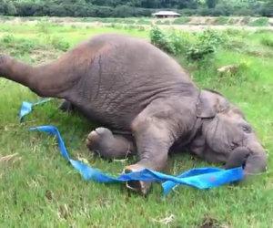 Un elefante che gioca felice