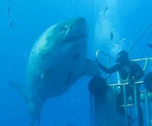 Un enorme squalo si avvicina ad un sub, la sua reazione è da brividi