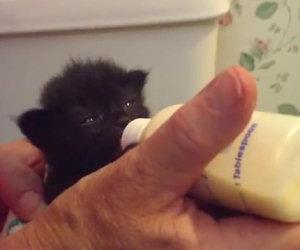 Un gattino veramente affamato