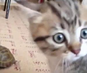 Un nuovo amico arriva a casa, ecco la divertente reazione del gatto
