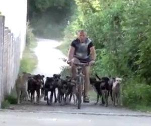 Un uomo ed i suoi 16 cani