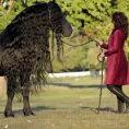 In questo video uno dei cavalli più belli e costosi al mondo