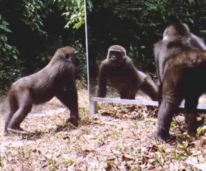 Mettono uno specchio nella foresta, ecco la reazione degli animali