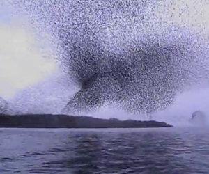 Uno stormo di milioni di uccelli
