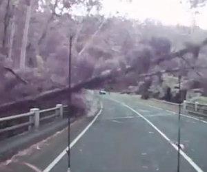 Mentre guida un'intera foresta viene spazzata via dal vento