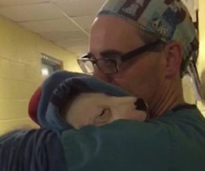 Il cane è agitato dopo l'operazione, ecco come lo consola il veterinario