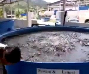 Dare da mangiare ad una vasca di pesci