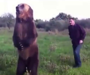 Ecco un incredibile orso domestico