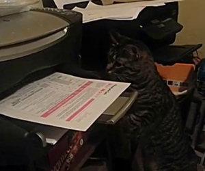 Mai stampare quando c'è il tuo gatto